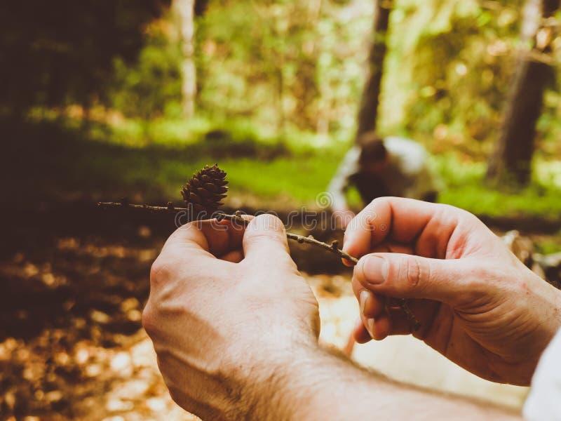 Primo piano di un maschio che tiene un ramo con il pino e un fondo vago fotografia stock