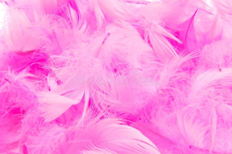Piume rosa immagine stock