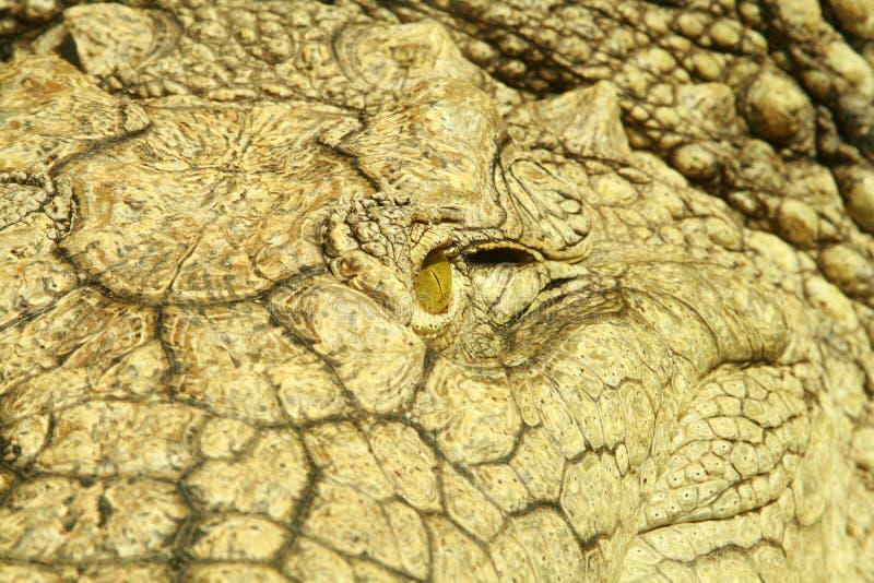 Primo piano di un occhio dell'alligatore fotografia stock