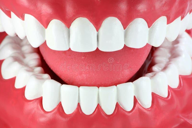 Primo piano di una bocca con i denti bianchi puliti fotografie stock libere da diritti