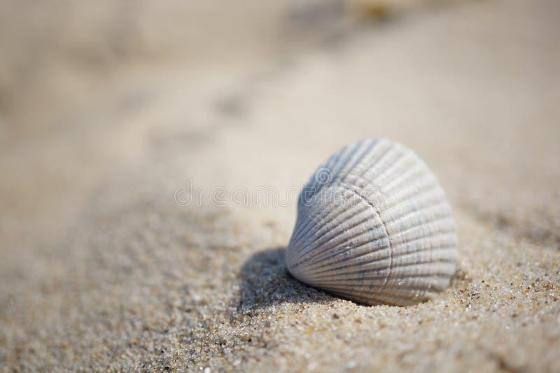 Conchiglia sulla sabbia immagini stock