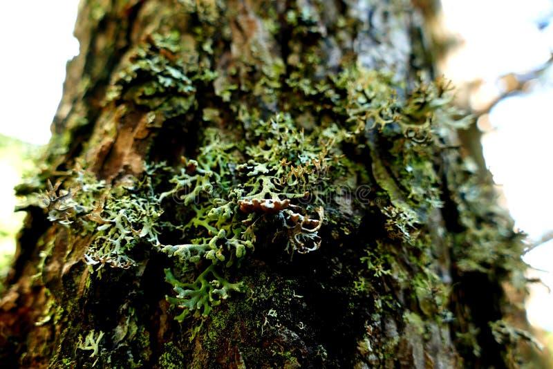 Primo piano di una corteccia di albero con muschio fotografia stock