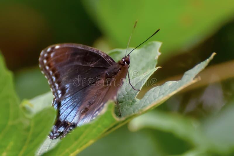 Primo piano di una farfalla appollaiata su una foglia immagine stock
