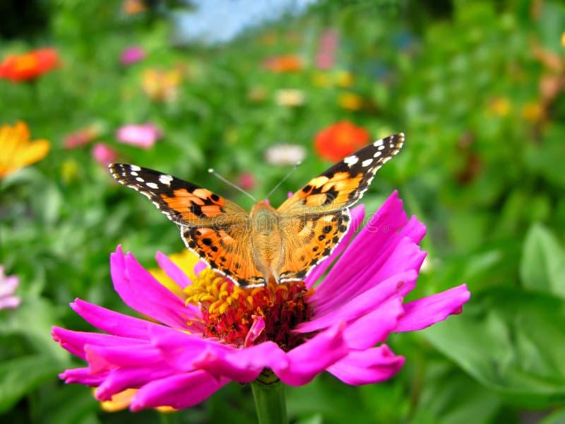 primo piano di una farfalla di monarca fotografie stock libere da diritti