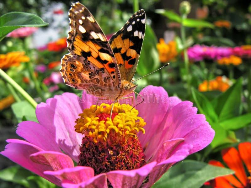 primo piano di una farfalla di monarca fotografia stock