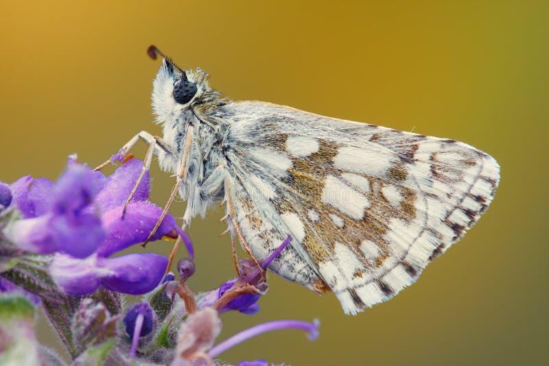 Primo piano di una farfalla su un fiore fotografia stock libera da diritti