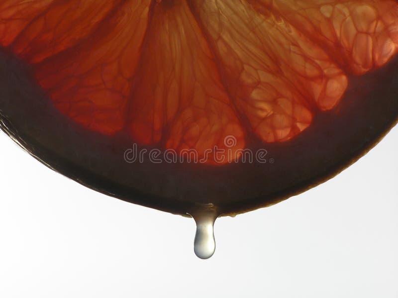 Primo piano di una fetta di frutta arancione dell'uva con una goccia immagine stock libera da diritti
