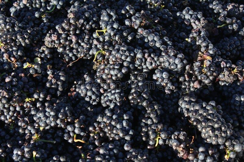 Primo piano di uno scomparto dell'uva immagini stock libere da diritti