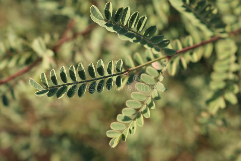 Primo piano DSLR delle foglie fotografia stock