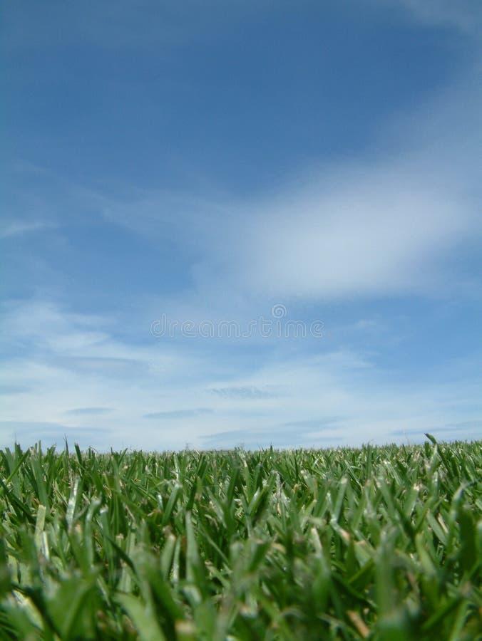 Primo piano e cielo dell'erba fotografie stock