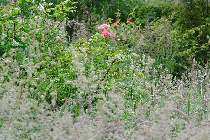 Primo piano e dettaglio su erba e sui fiori alti in un giardino selvaggio fotografie stock