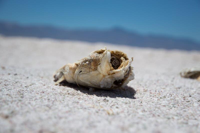 Primo piano estremo di una conchiglia sulla sabbia con un fondo vago fotografie stock libere da diritti