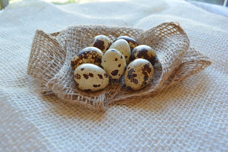 Primo piano fresco delle uova di quaglia su fondo bianco immagine stock