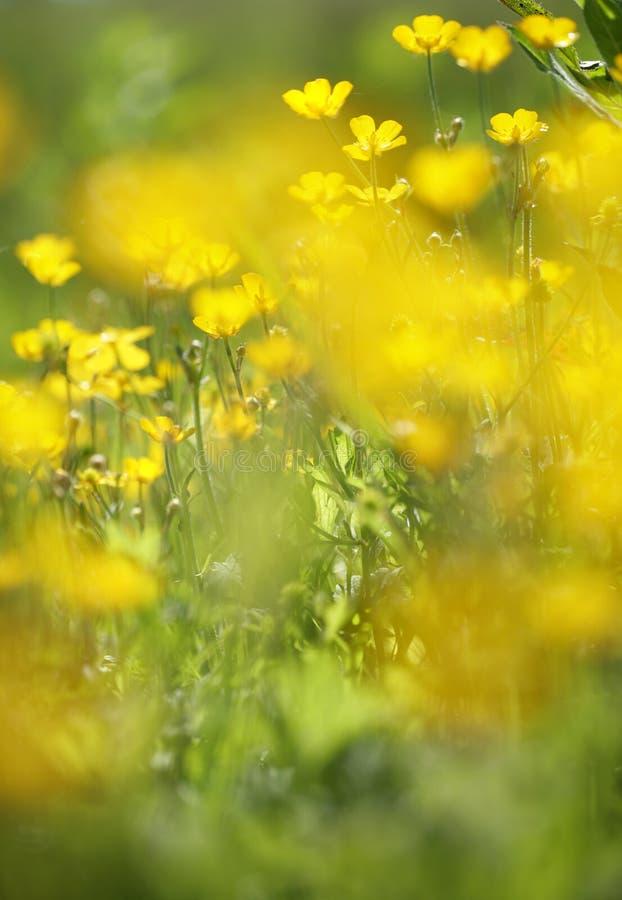 Primo piano giallo del fiore fotografie stock