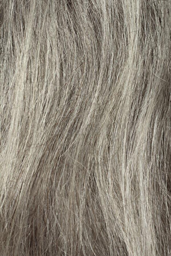 Primo piano grigio dei capelli fotografia stock