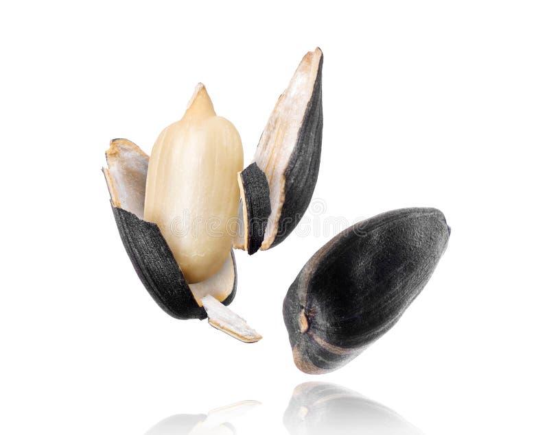 Primo piano incrinato del seme di girasole su fondo bianco fotografia stock libera da diritti