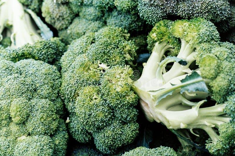 Primo piano multiplo dei broccoli fotografia stock