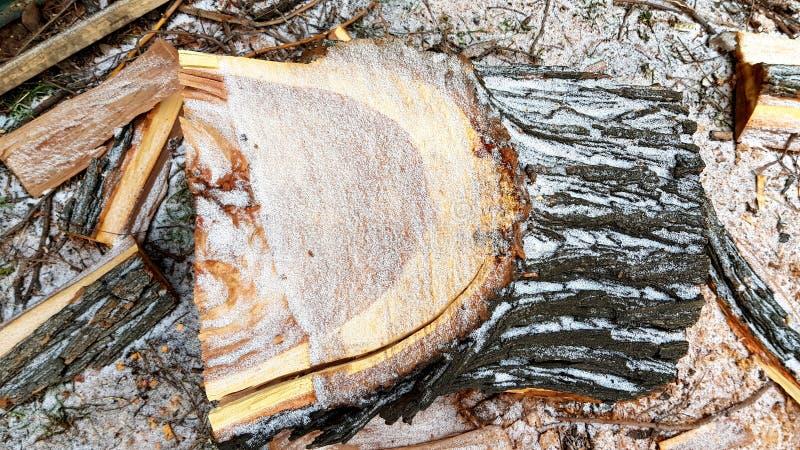 Primo piano orlato del ceppo della legna da ardere con neve bianca su  fotografie stock libere da diritti
