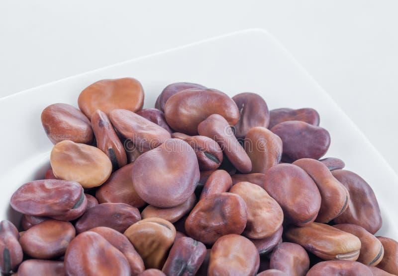 Primo piano per i loti in intestino bianco fotografia stock