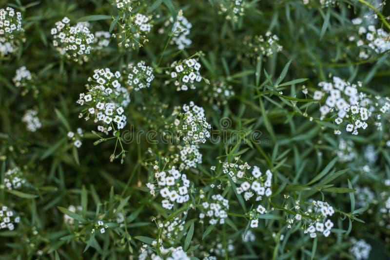 Primo piano piccolo dei wildflowers fotografia stock
