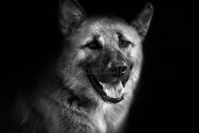 Primo piano, ritratto di un cane che esamina macchina fotografica fotografia stock