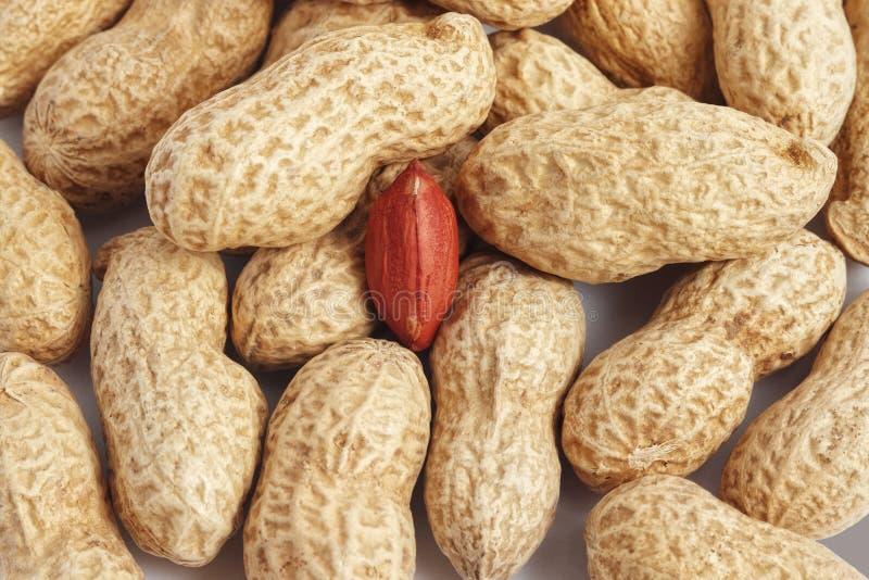 Primo piano rosso del nocciolo dell'arachide nelle coperture fotografie stock libere da diritti