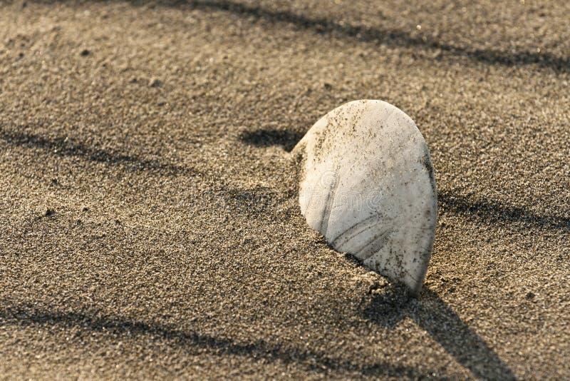 Primo piano su un dollaro di sabbia fotografia stock