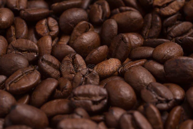 Primo piano sui chicchi di caffè Coffea arabica fotografie stock libere da diritti