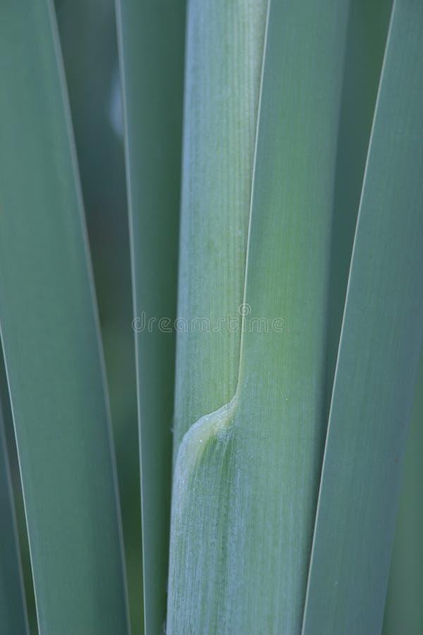 Primo piano sui gambi e sulle erbe in un prato fotografia stock libera da diritti