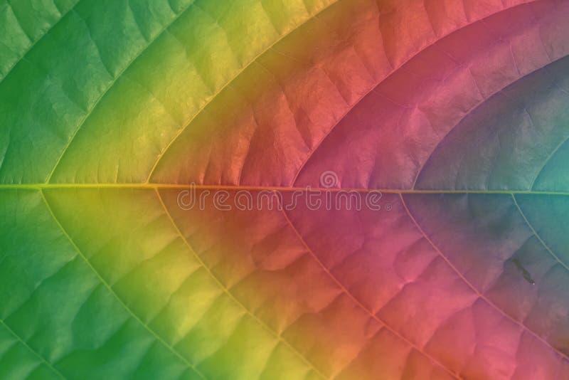 Primo piano tinto con una foglia di pendenza di colore immagine stock libera da diritti
