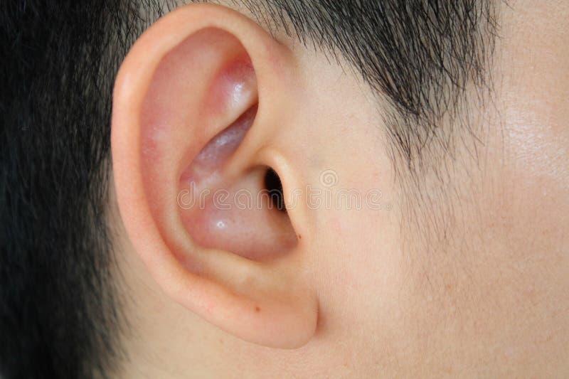 Primo piano umano dell'orecchio fotografia stock