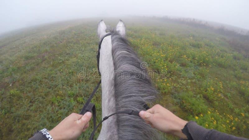 Primo punto di vista della persona di montare un cavallo Punto di vista del cavaliere che cammina allo stallone alla natura Moto  fotografie stock