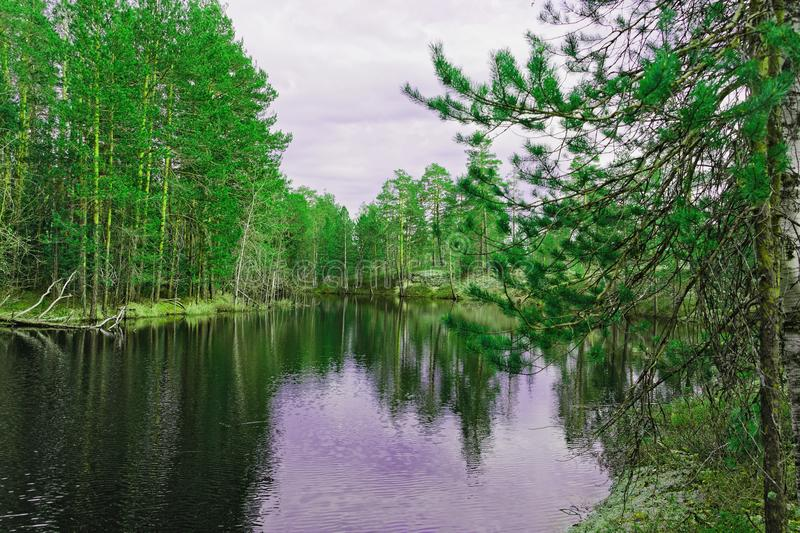 Primordial beauty of Siberian nature. View of the banks of the Siberian taiga river during the flood royalty free stock photography