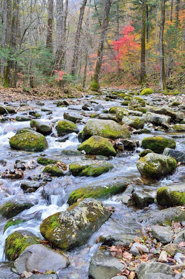 Primorsky Krai, halny rzeczny rosnący wierzchołek góra Pedan fotografia royalty free