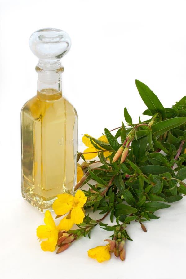 Primrose βραδιού πετρέλαιο με τα άνθη στοκ εικόνες