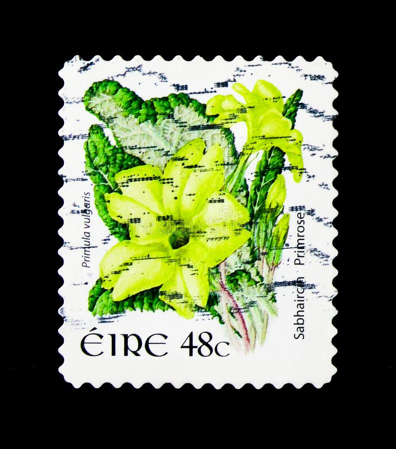 Primrose - Primula vulgaris, Wild Flowers Definitives serie, cir. MOSCOW, RUSSIA - MARCH 28, 2018: A stamp printed in Ireland shows Primrose - Primula vulgaris royalty free stock photo
