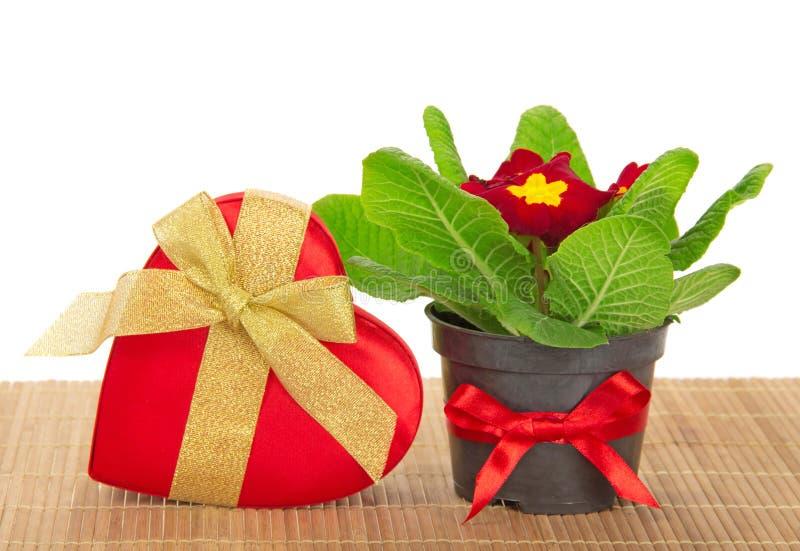 Download Primula, Prezenta Serce Na Bambusowym Płótnie Pudełko Obraz Stock - Obraz złożonej z jaskrawy, czerń: 41954787