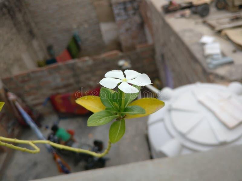 Princípios da natureza da flor fotografia de stock