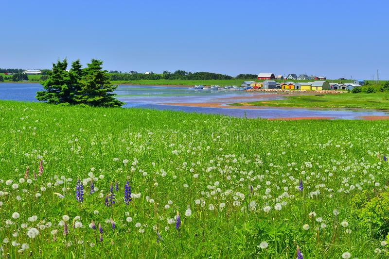 Prince edward island. Fishermans village and flowers at prince edward island royalty free stock photography