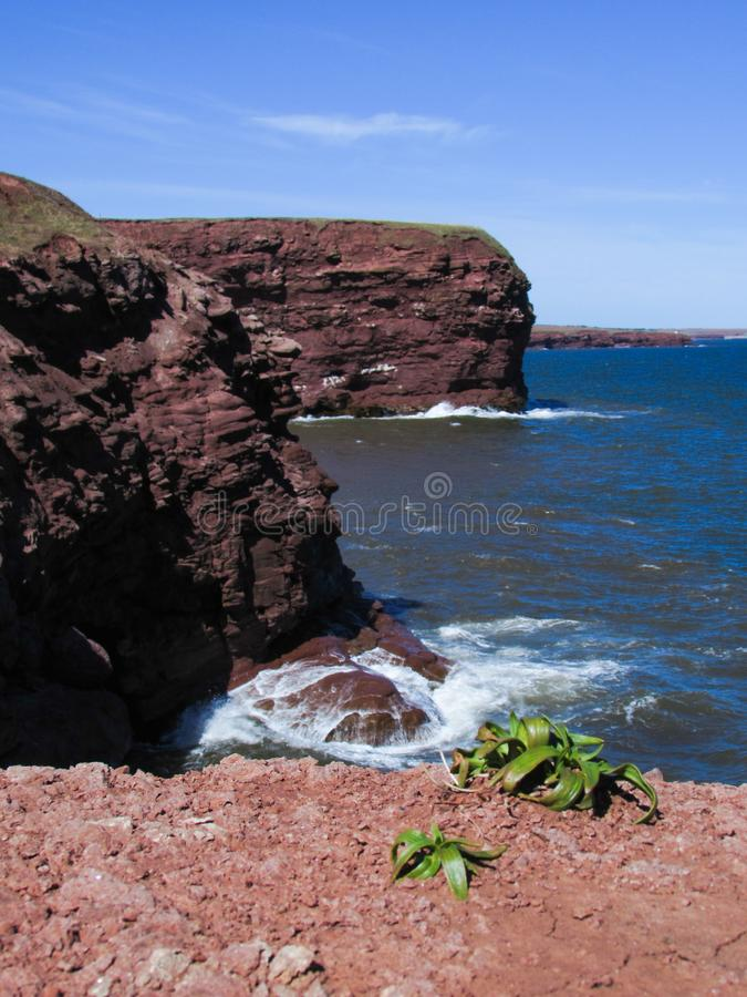 Prince Edward Island red cliffs royalty free stock image