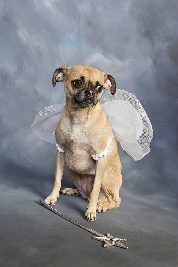Princesa de hadas del perro fotos de archivo