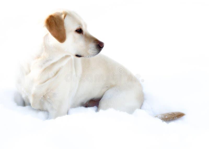 Princesa de la nieve foto de archivo libre de regalías