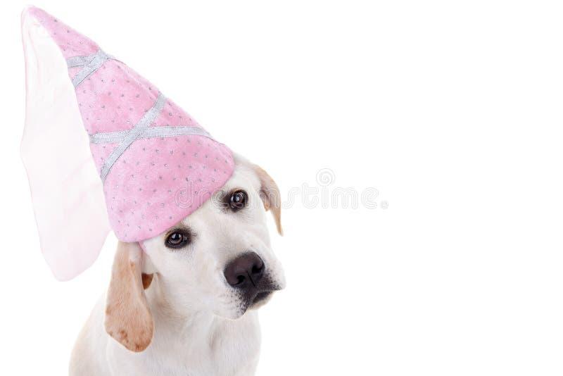 Princesa del perro fotografía de archivo