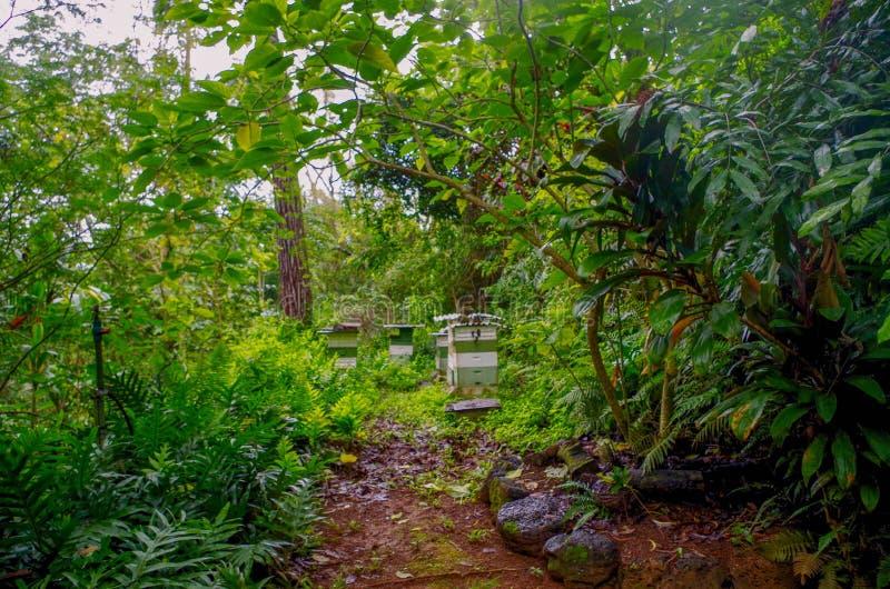 Princeville Botanische Tuinen, Kauai, Hawaï, de V.S. stock fotografie