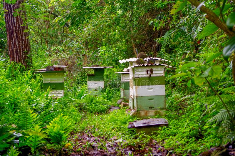 Princeville Botanische Tuinen, Kauai, Hawaï, de V.S. stock foto's