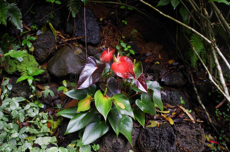 Princeville Botanische Tuinen, Kauai, Hawaï, de V.S. stock afbeeldingen