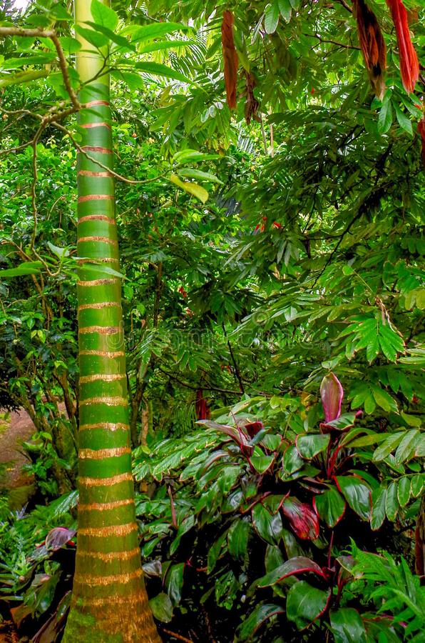 Princeville Botanische Tuinen, Kauai, Hawaï, de V.S. royalty-vrije stock afbeelding
