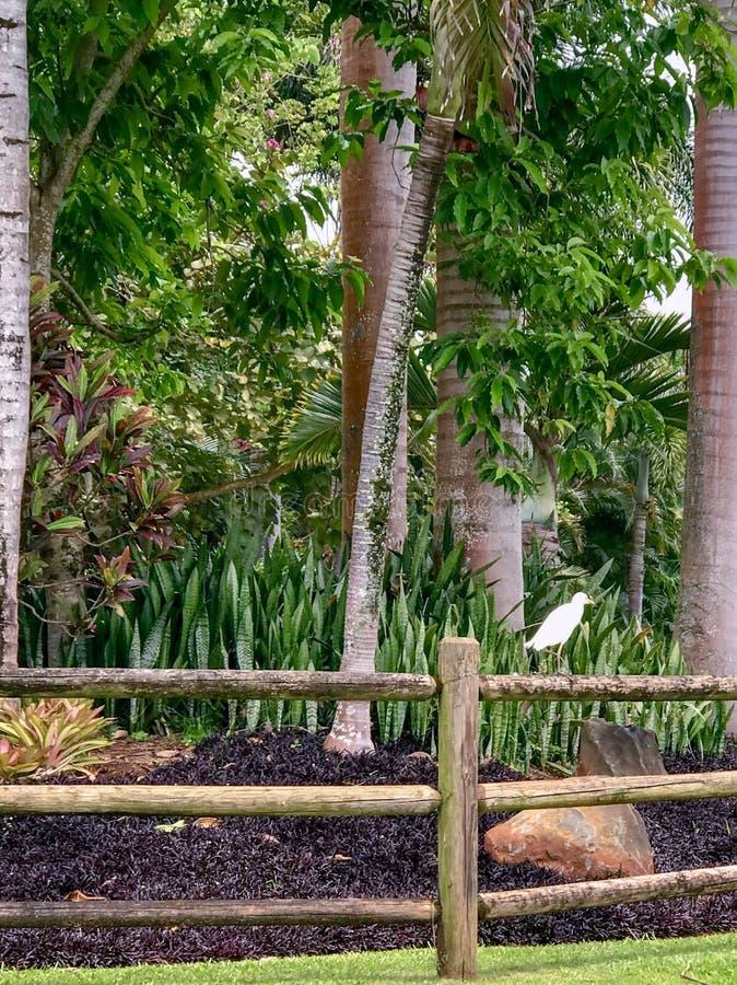 Princeville Kauai, Hawaii, USA fotografering för bildbyråer