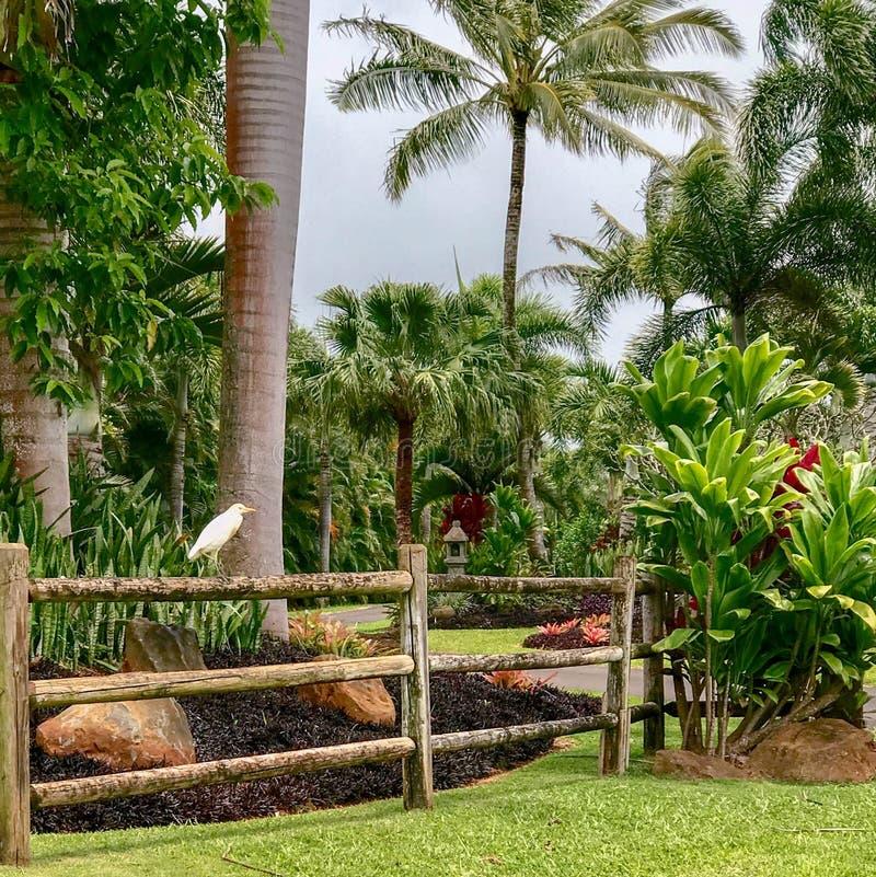 Princeville Kauai, Hawaii, USA royaltyfri foto