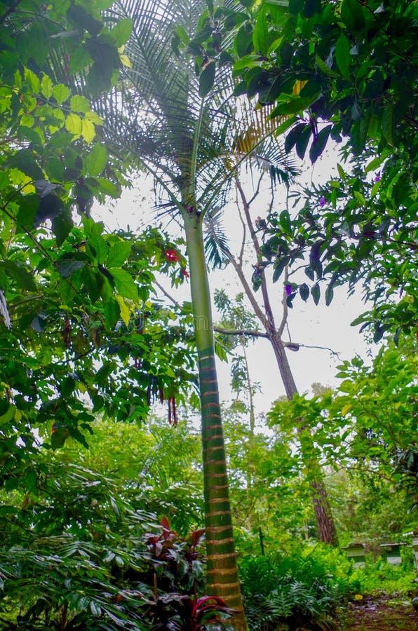 Princeville ogródy botaniczni, Kauai, Hawaje, usa obrazy stock